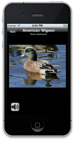 iCatcher Birds - iPhone Bird Identification App